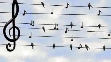 Nuty ptaki